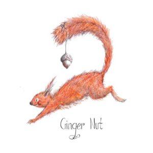DRC Illustrations Ginger Nut