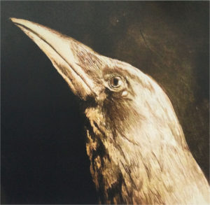 The Oracle (crow)
